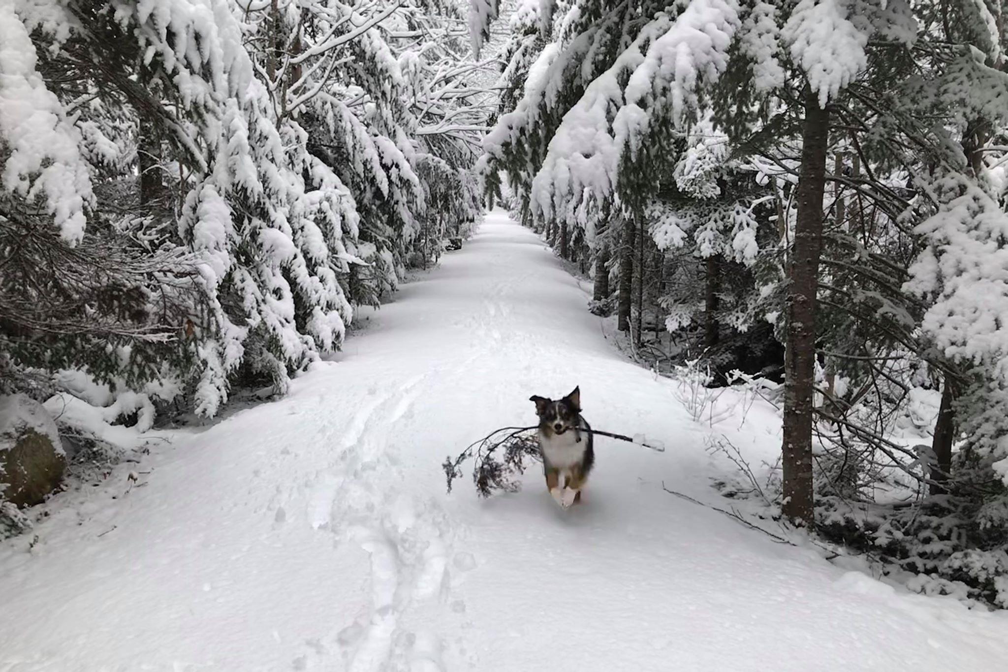 sneeuw canada