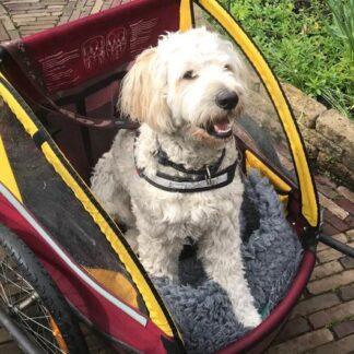 Sporten/wandelen/fietsen met de hond